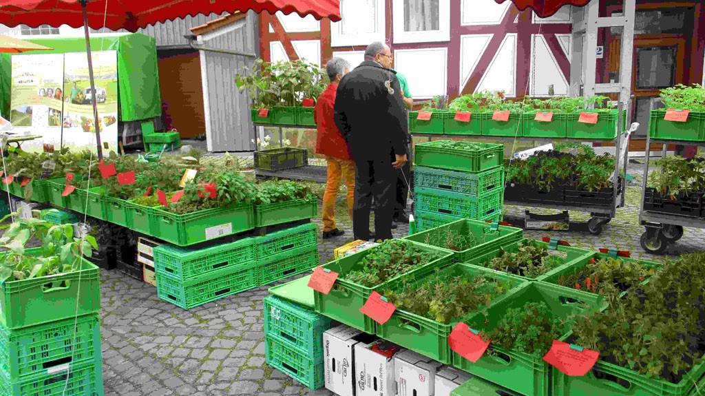 Frühlingsmarkt Brauplatz 1