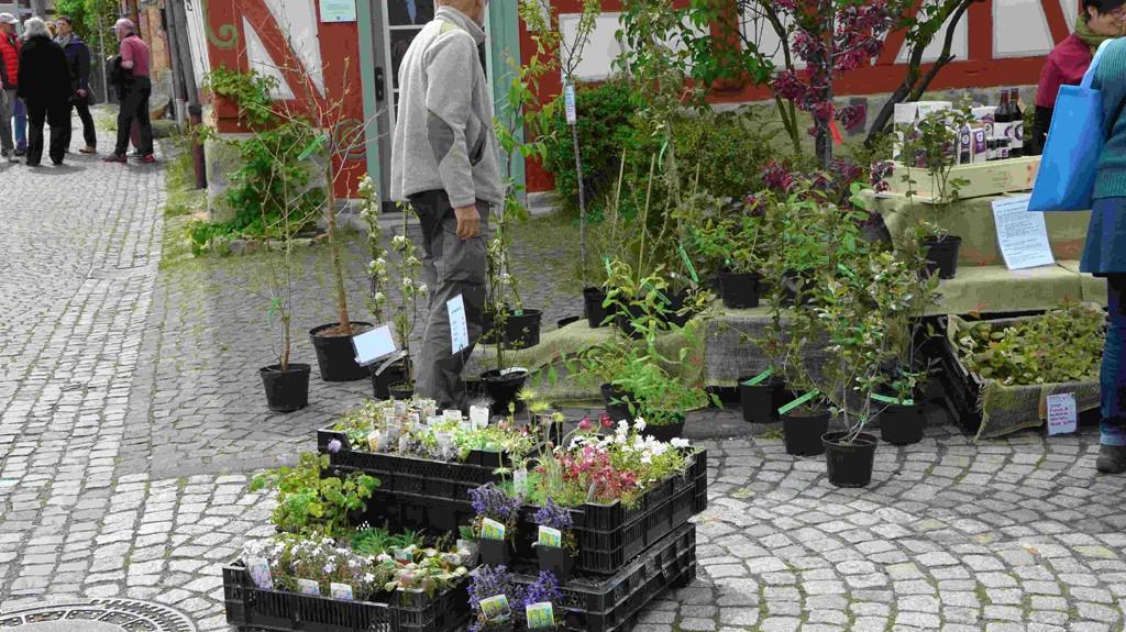 Frühlingsmarkt Pflanzlust